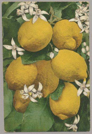 Lemons1A(2)