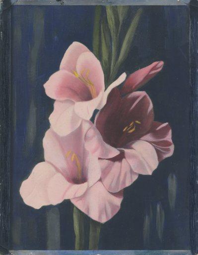 WinslowInk(Pink)2
