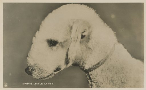 Mary'sLittleLamb