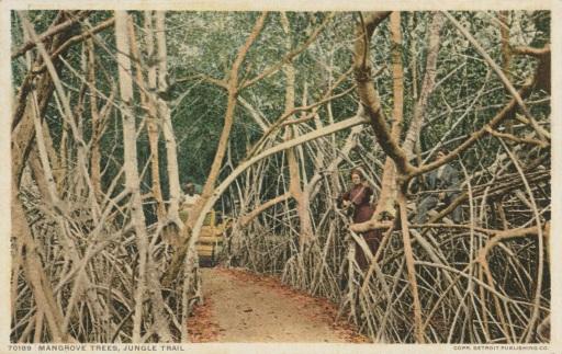 MangroveTrees